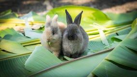 Conejo joven que come las hojas en el jardín Imagen de archivo libre de regalías