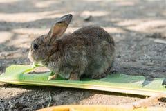 Conejo joven que come las hojas en el jardín Imagenes de archivo