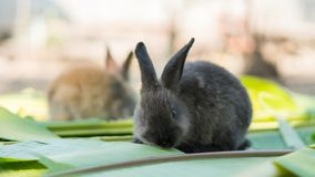 Conejo joven que come las hojas en el jardín Fotos de archivo