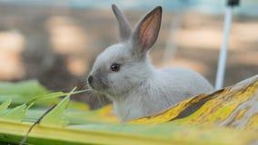 Conejo joven que come las hojas en el jardín Foto de archivo libre de regalías