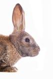Conejo lindo Imágenes de archivo libres de regalías