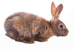 Conejo lindo Imagenes de archivo