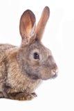 Conejo lindo Foto de archivo