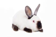 Conejo lindo Fotos de archivo