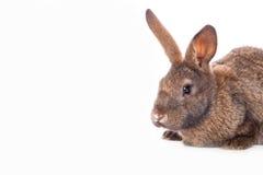 Conejo lindo Fotografía de archivo libre de regalías