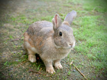 Conejo lindo Imagen de archivo