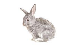 Conejo lindo adorable en blanco Fotografía de archivo libre de regalías