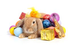 Conejo lindo con los huevos de Pascua aislados fotos de archivo