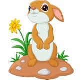 Conejo lindo de la historieta Fotos de archivo libres de regalías