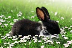 Conejo lindo en hierba Imagen de archivo