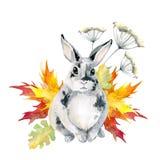 Conejo manchado gris, sentándose Arce de las hojas de otoño watercolor stock de ilustración