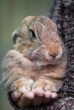 Conejo a mano Fotos de archivo