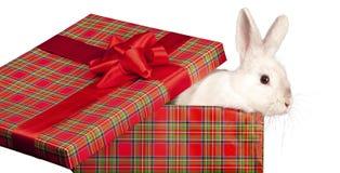 Conejo mullido en giftbox Fotos de archivo