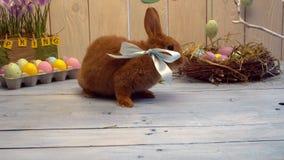 Conejo mullido en presente lindo del concepto tradicional del símbolo de la celebración de pascua del arco metrajes