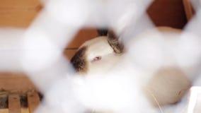 Conejo nacional en una jaula Cultivo nacional almacen de metraje de vídeo