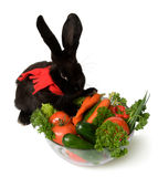 Conejo negro Fotografía de archivo