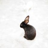 Conejo negro con los oídos largos foto de archivo