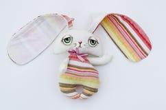 Conejo o liebres Imágenes de archivo libres de regalías