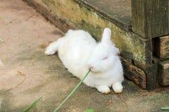 Conejo que come la comida de conejo Imagen de archivo