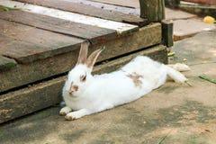 Conejo que come la comida de conejo Foto de archivo