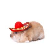 Conejo que desgasta un sombrero mexicano colorido Imagenes de archivo