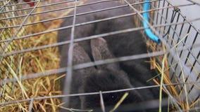 Conejo que se sienta debajo de la jaula metrajes