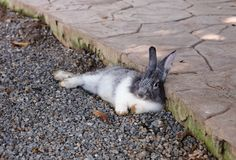 Conejo relajante lindo con el fondo de la naturaleza Fotos de archivo libres de regalías