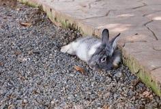 Conejo relajante lindo con el fondo de la naturaleza Imágenes de archivo libres de regalías