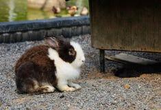 Conejo relajante lindo con el fondo de la naturaleza Foto de archivo