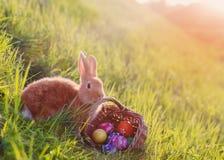 Conejo rojo con los egs de pascua en hierba verde Fotos de archivo