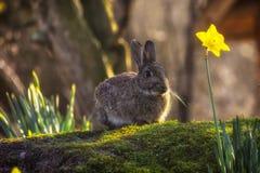 Conejo salvaje Imágenes de archivo libres de regalías