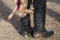 Conejo sangriento muerto un trofeo de la caza Tradiciones de Mongolia Imágenes de archivo libres de regalías