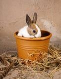 Conejo tímido en maceta Fotografía de archivo