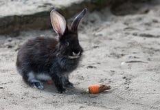 Conejo trasero Foto de archivo libre de regalías