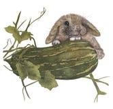 conejo y calabacín de la acuarela Imagenes de archivo