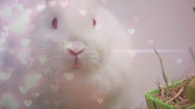 Conejo y corazones almacen de video