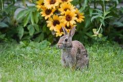Conejo y flores de Gato Fotos de archivo libres de regalías
