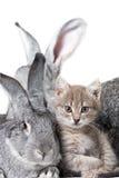 Conejo y gatito Fotografía de archivo