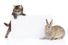 Conejo y gato Fotografía de archivo libre de regalías