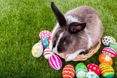 Conejo y huevos de Pascua Fotos de archivo