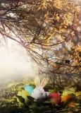 Conejo y huevos de Pascua coloridos en naturaleza Imagenes de archivo