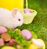 Conejo y huevos de Pascua en hierba verde Foto de archivo libre de regalías