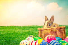 Conejo y huevos de Pascua en hierba verde con el cielo azul (i filtrado Fotografía de archivo libre de regalías