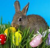 Conejo y huevos de Pascua en la hierba del jardín Imagen de archivo