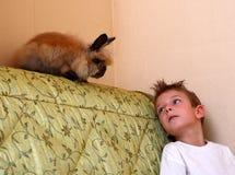 Conejo y muchacho Foto de archivo libre de regalías