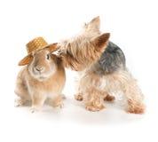 Conejo y perro Fotos de archivo