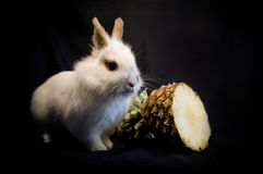 Conejo y piña Imágenes de archivo libres de regalías