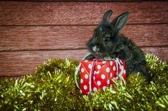 Conejo y regalo de Navidad Imagenes de archivo