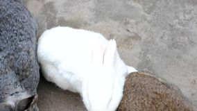 Conejos metrajes