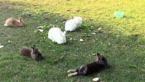 conejos almacen de video